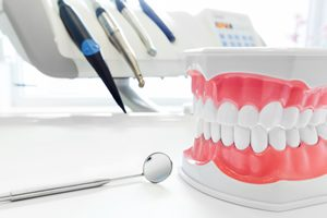 Model of human teeth